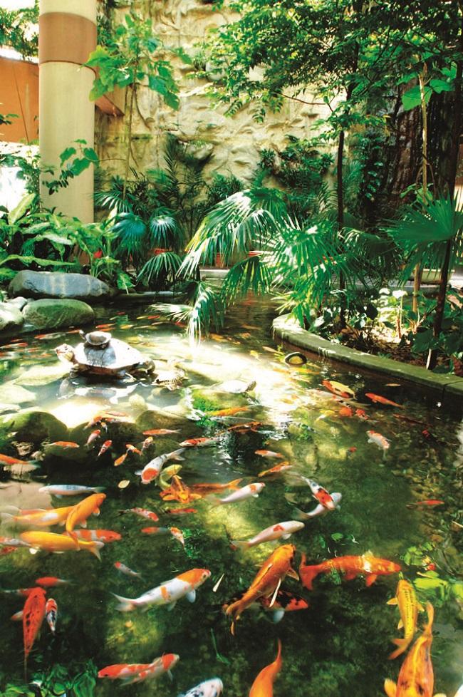 Enjoying outdoor freshness indoors for Koi 1 utama
