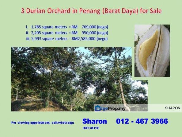 Durian Orchard, Barat Daya, Penang, Penang, Balik Pulau