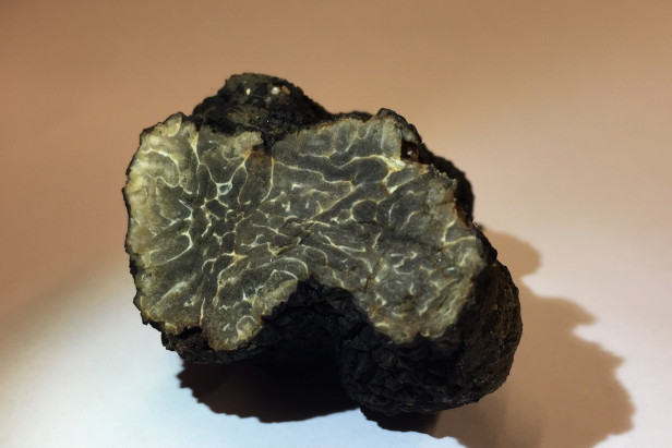 Paris truffle find hailed as boon for urban gardeners